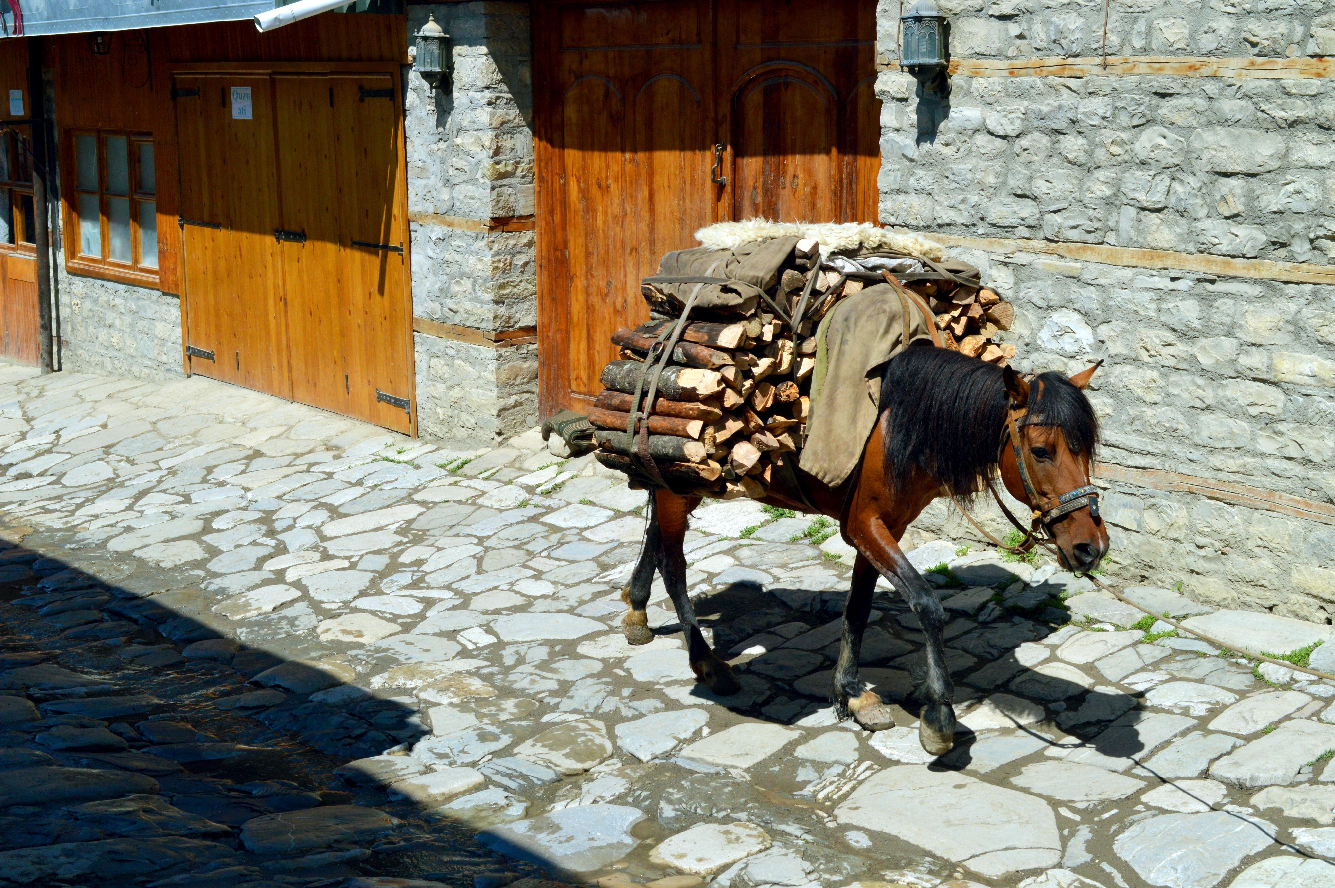 Фото-отчёт с нашей поездки в Лагич.