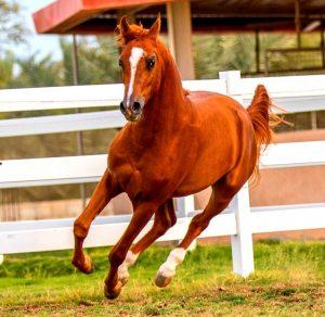 COUNTRY LEISURE TIME AT HORSE CLUB - ЗАГОРОДНЬIЙ ДОСУГ В КОННОМ КЛУБЕ